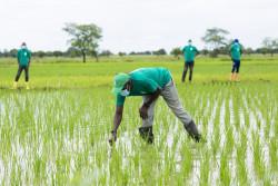 Agriboooster OCPA Ghana.jpg